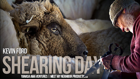SHEARING DAY | Livestock Are Essential and Sheep Have A Lot To Offer