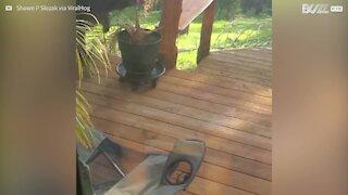 Un ours s'invite sur sa terrasse, attiré par la mangeoire à oiseaux