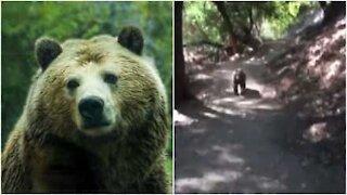 Orso spaventa a morte una famiglia durante una passeggiata