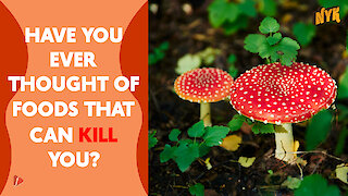 What Are The Exotic Foods That Can Kill You?
