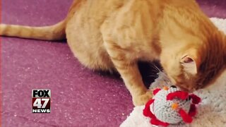 Mutual Rescue: Pets Helping Cope with Stress During Pandemic