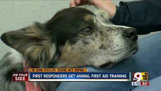 First responders learn animal first aid