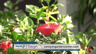 Metro Blend: Canoyer Garden Center