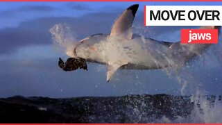 Eclipse of the great white sharks