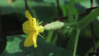 MELINDA'S GARDEN MOMENT - FLOWERS BUT NO FRUIT