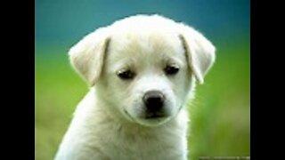 cute dogs must watch very cute