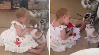 Toddler tries to comfort dog with separation anxiety