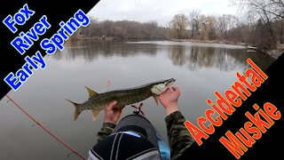 The Accidental Muskie While Kayak Bass Fishing