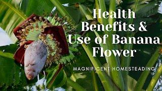 Health Benefits & Use of Banana Flower