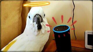 Cockatoo ends up ordering hilarious items through Alexa