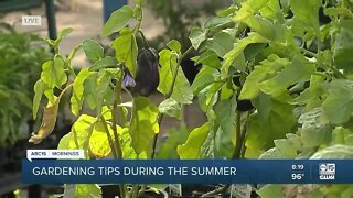 Tips for gardening during the summer months
