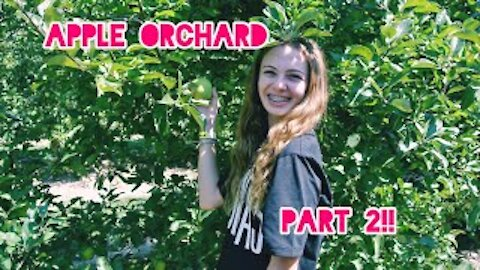 Apple Orchard Part 2!! Apple cannon & apple picking!!