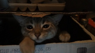Cat plays high energy game of peekaboo