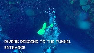 Divers find hiding creatures on ocean floor