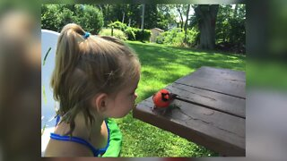 "Three-year-old Grand Island girl deemed ""bird-whisperer"""