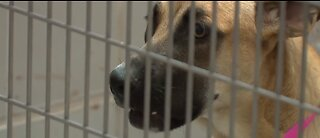 UPDATE: Animal Foundation takes in 275+ lost pets amid COVID-19 policy changes