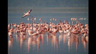-Pink Flamingo...