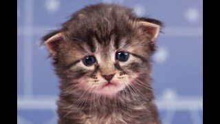 Help your Depressed cat!
