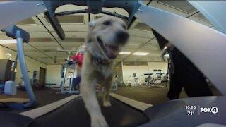 Workout like a dog