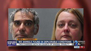 Two arrested for hoarding and abusing over 150 animals at Animal Welfare Society
