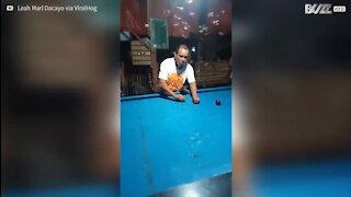 Il nettoie une table de billard en mangeant les insectes qui l'infestent