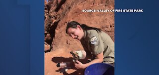 Gila monster rescued at Valley of Fire
