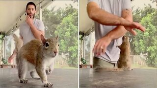 Nutty Pet Owner Teaches Squirrel How To Dance Along With Him