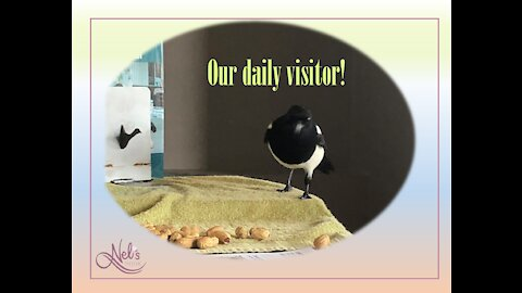 Our daily visitor!