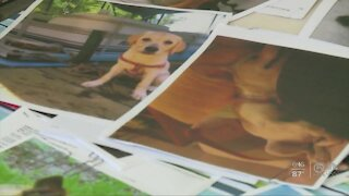 Palm Beach County animal rescue founder fighting for her life seeks help from community