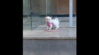 Puppy runs head first into glass door