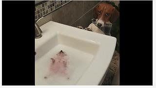 Hedgehog Thoroughly Enjoys Bubble Bath Time