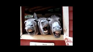 videos de burros graciosos