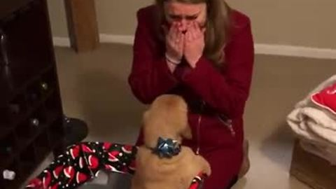 Husband Gifts Wife With A Golden Retriever Puppy For Christmas