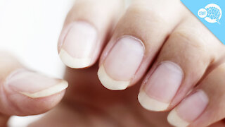 BrainStuff: How Long Can Fingernails Grow?