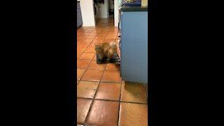 Fetching Kitty Cat 🐈