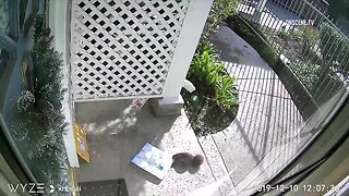 WATCH: Squirrel caught stealing package outside apartment