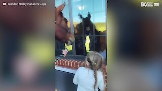 Family takes along horse to surprise great-grandparents