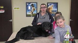 Owners reunited with lost dog after months