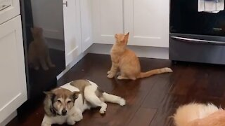 Simple & genius way to keep cats from jumping on kitchen counter