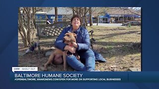 Meg the dog is up for adoption at the Baltimore Humane Society