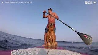 Cane pratica stand up paddle insieme al padrone