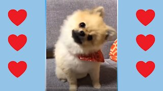 Funny Animals Video Compilation - Funny Cats, Funny Dogs, Cute Animals!!!