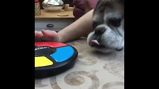 Game-loving boxer goes for high score by trying to eat 'Simon'