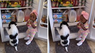 Sneaky toddler & puppy caught red-handed stealing snacks