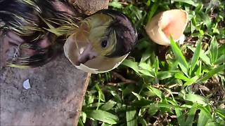 Everyday Hero Helps Duckling Hatch From Its Shell