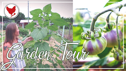 A Tour of My Gardens