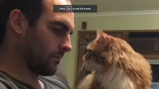 Kitten is just totally desperate for attention