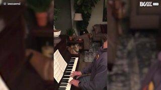 Cagnolina accompagna il padrone al piano