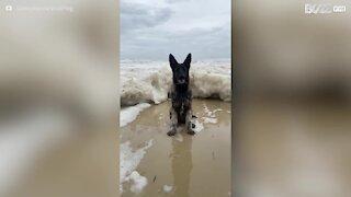 Un chien submergé par une vague d'écume