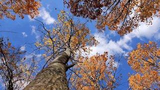 Autumn Photography 2020